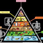 Dietas Para Diabeticos Y Su Relación Con La Salud