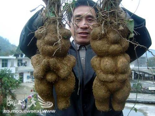 raices de he shou wu